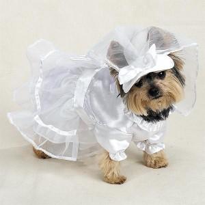 trouwjurk voor honden