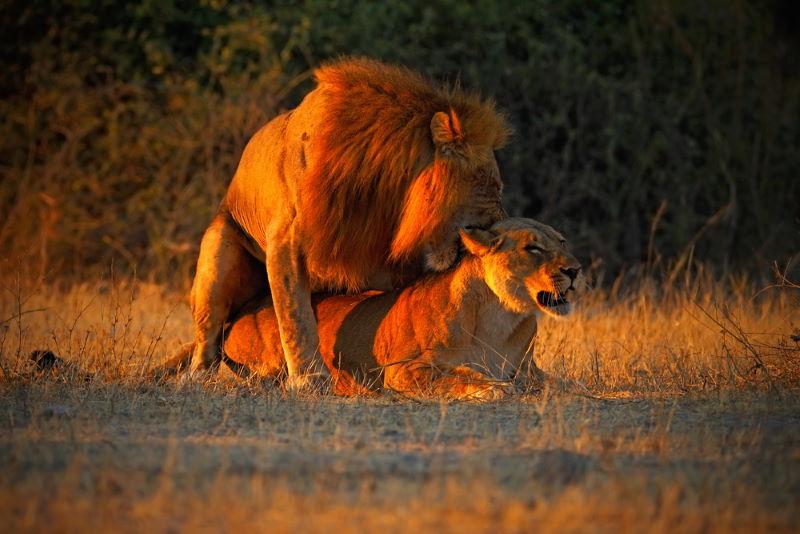leeuwen paren