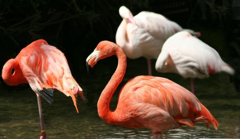 avifauna vogelpark flamingo