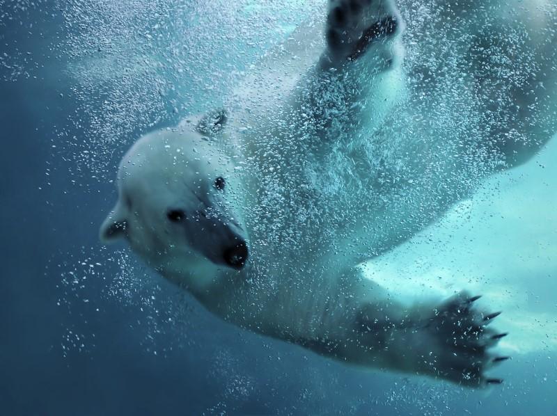 wildlands ijsbeer