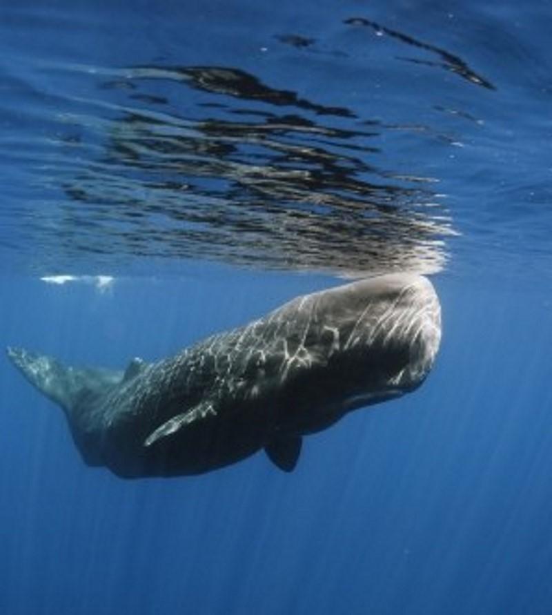Top 10 Grootste Dieren Op Aarde Alletop10lijstjes