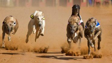 snelste-hondenrassen