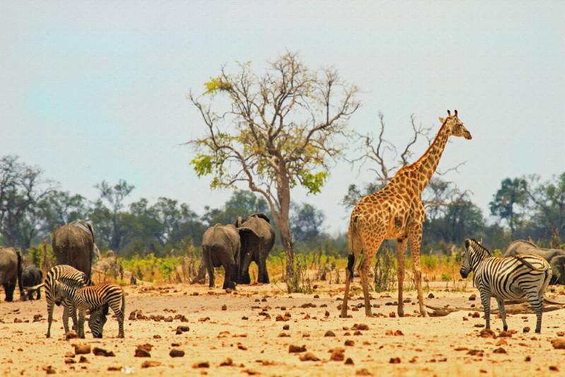 Hwange Nationaal Park
