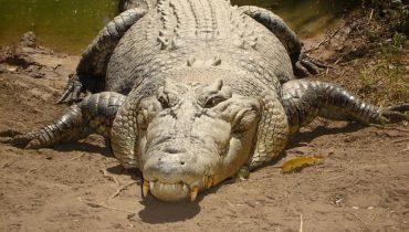 grootste-reptielen