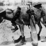 ezels in de oorlog