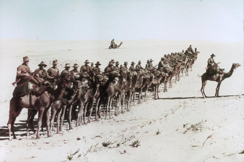 kamelen in de oorlog 2