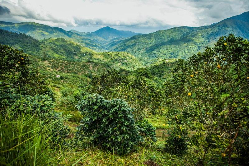 jamaica eiland