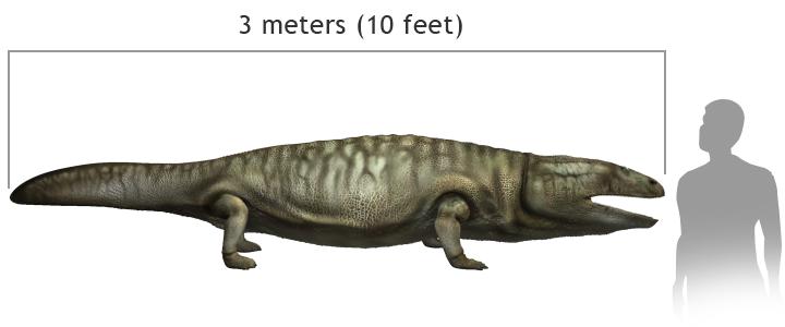 Metoposaurus2