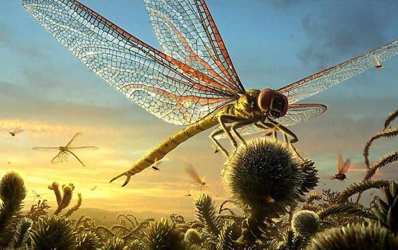 gigantische libelle