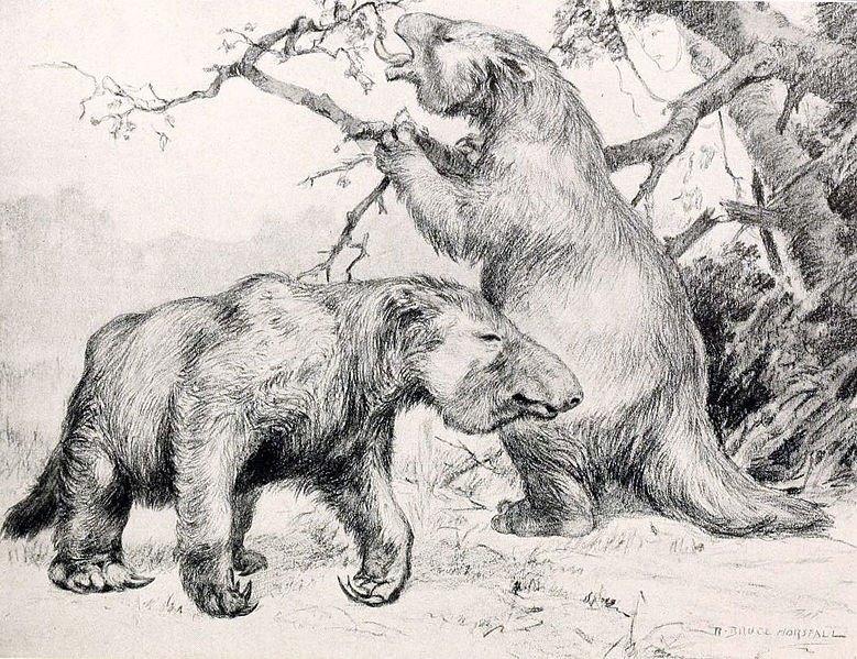 gigantische luiaards