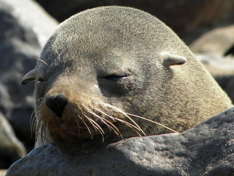 10 Dieren die (bijna) niet slapen - Alletop10lijstjes