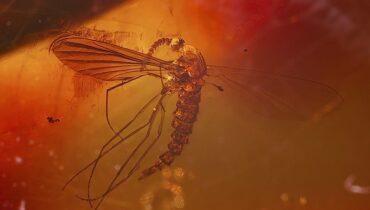 mug in barnsteen