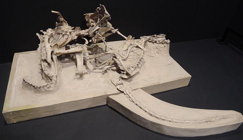 velociraptor fossiel
