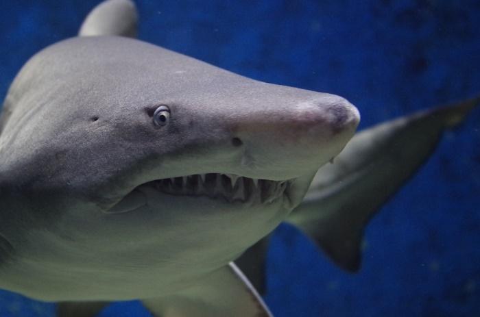 haaienhuid