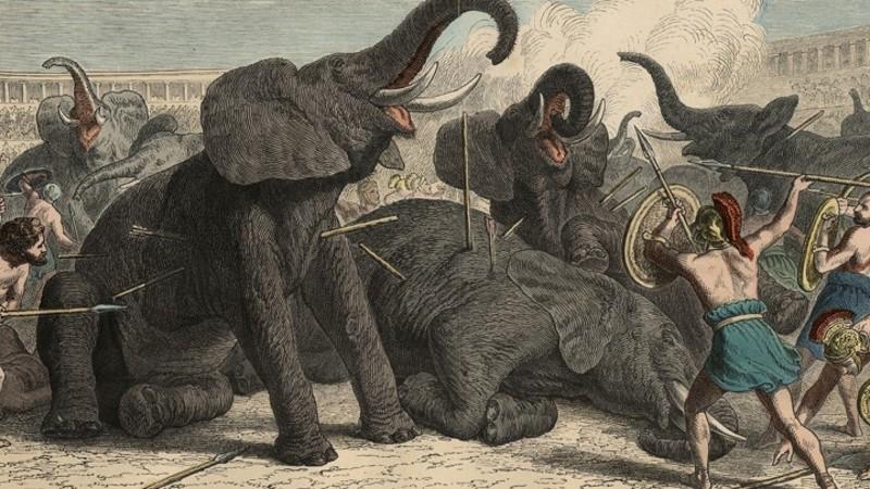 dierengevechten in het colosseum