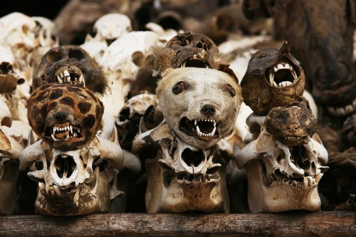 offeren dieren voodoo