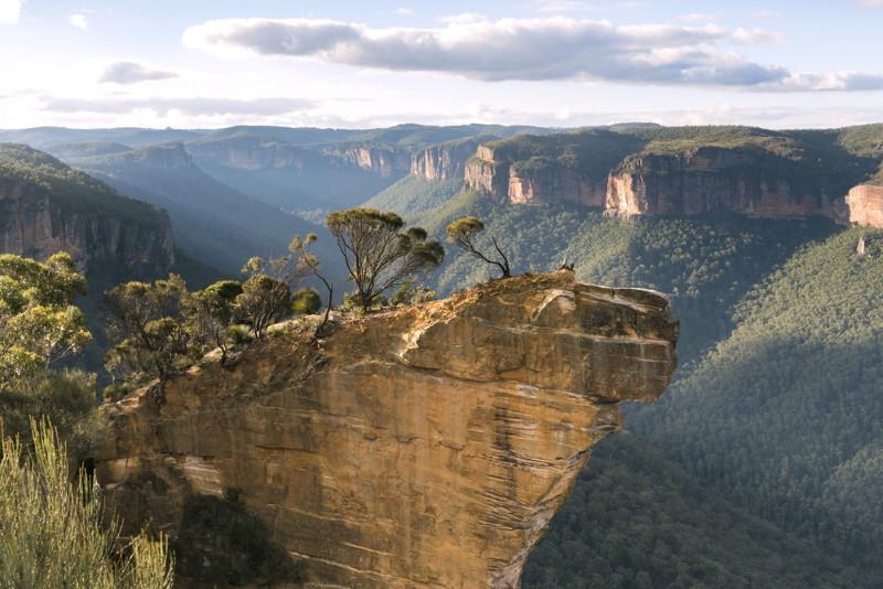 Australische gematigde regenwouden