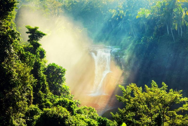 Nieuw-Guinea regenwouden