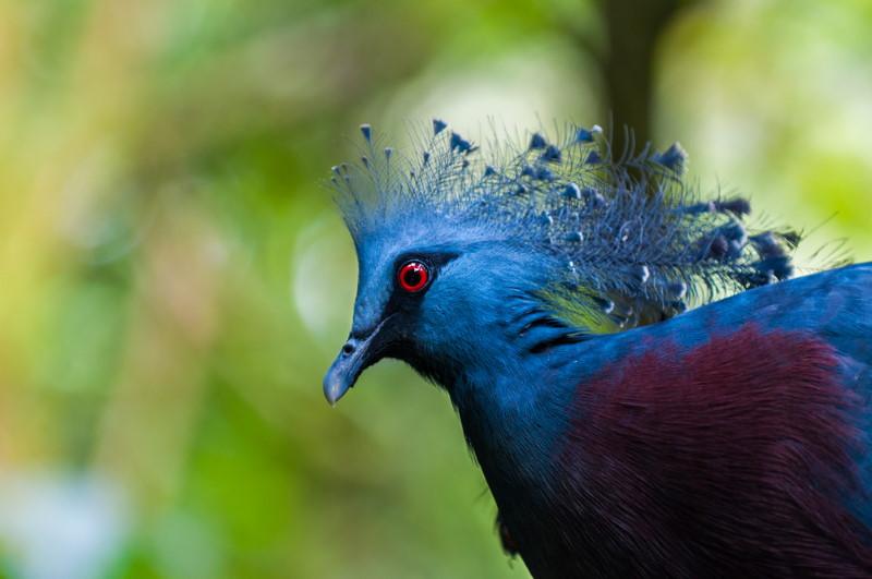 Nieuw-Guinea vogels bijzonder