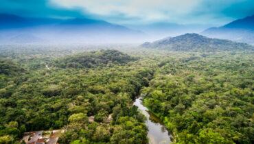 kongobekken regenwoud