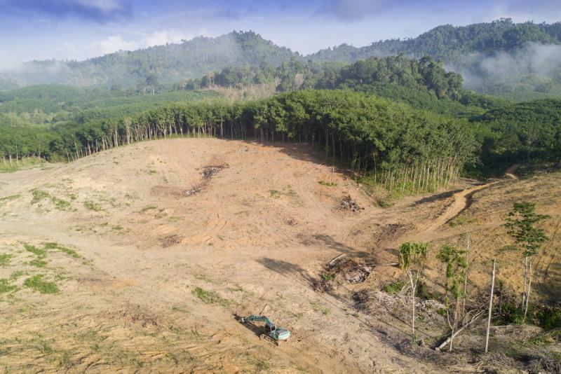 ontbossing regenwoud