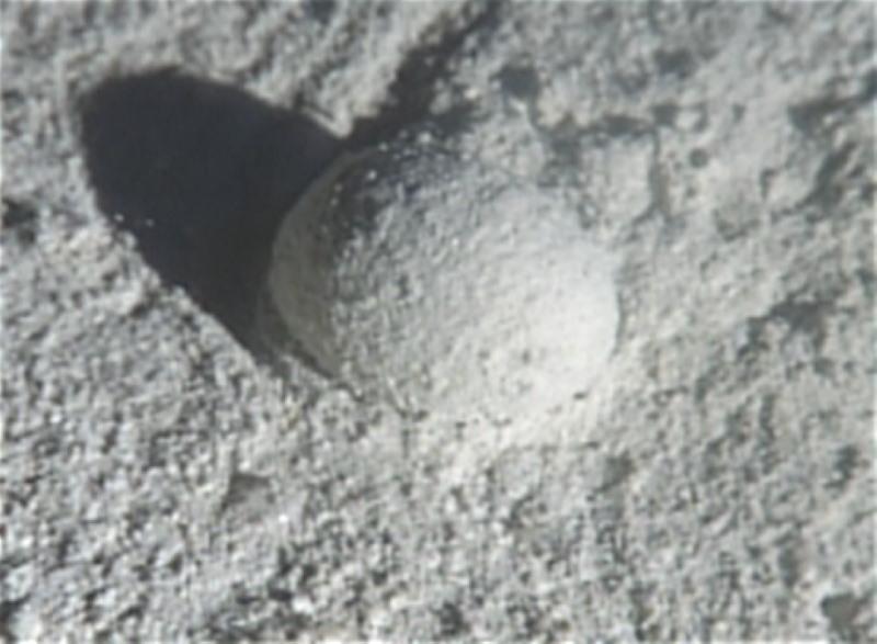 Gromia Sphaerica
