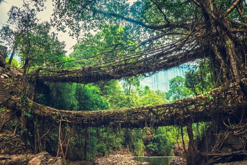 Cherrapunji brug