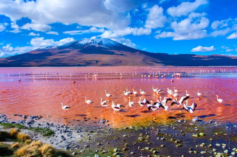 Laguna Colorada - roze meer