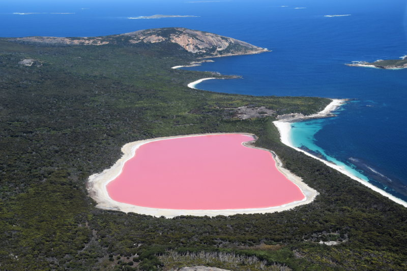 lake hollier - roze meer in australie