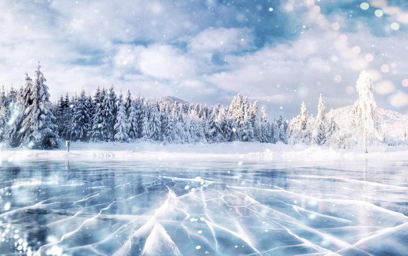 planten in de ijstijd