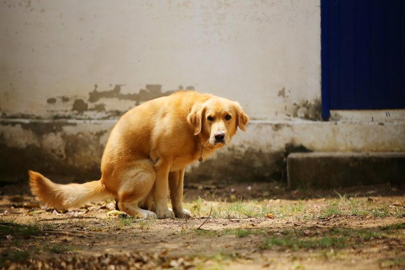 hond poept in een bepaalde richting