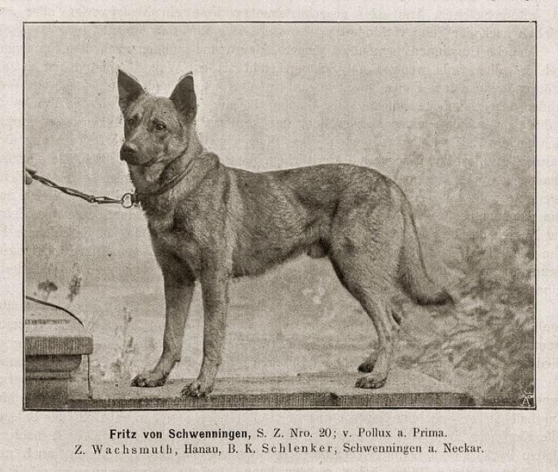 honden 100 jaar geleden