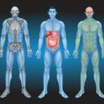 meest voorkomende elementen menselijk lichaam