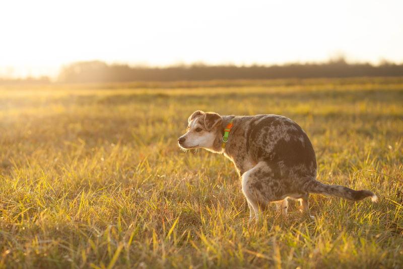 ontslasting hond