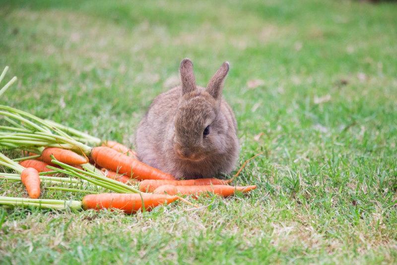 wortel voor de paashaas