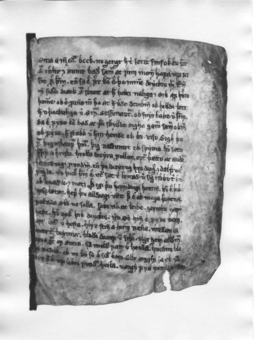 Ragnars saga loðbrókar