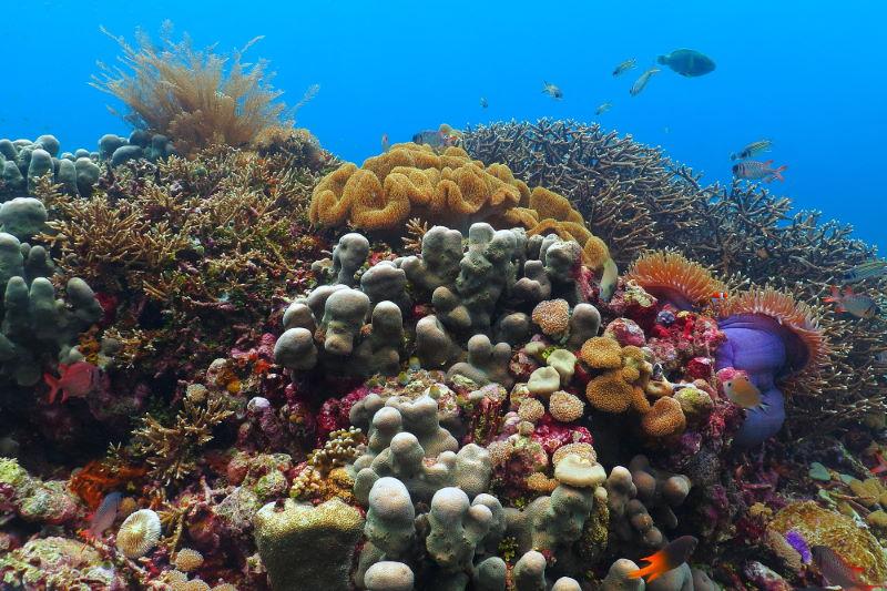Apo Reef 2