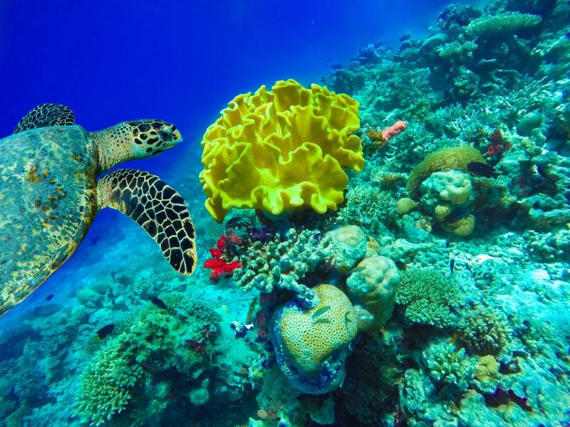 Great Florida Reef 2