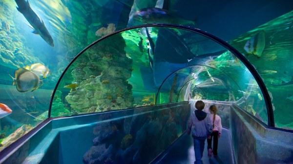 תוצאת תמונה עבור brighton uk Sharks' cave