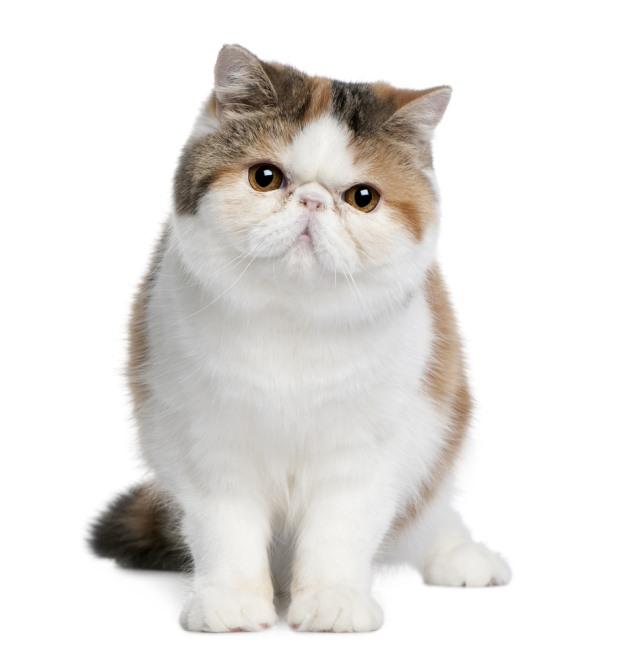 Exotic kat