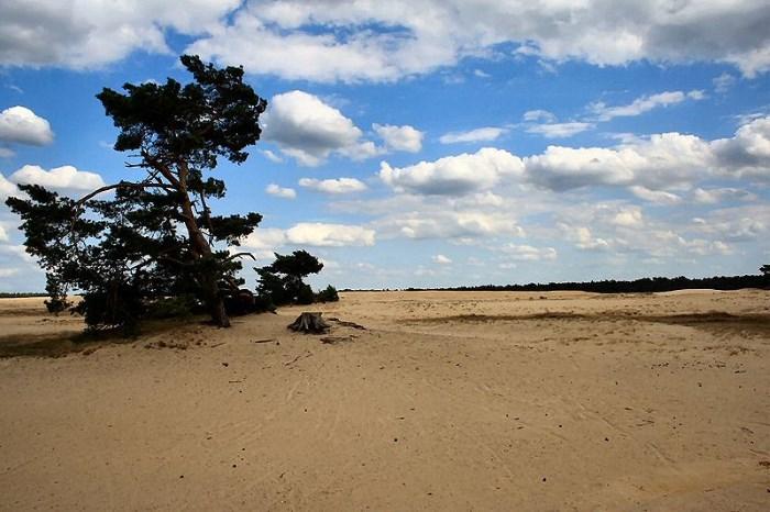 Hoge Veluwe Nationaal Park