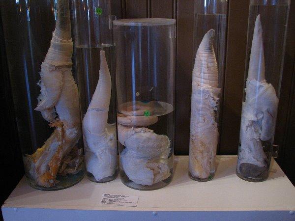 IJslands Fallologisch Museum in Reykjavik