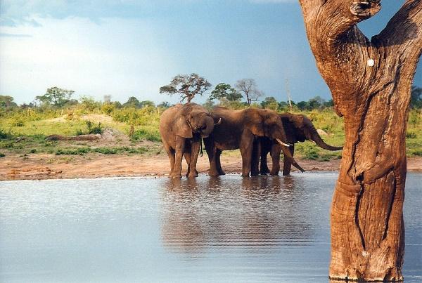 Kavango–Zambezi Transfrontier Conservation Are
