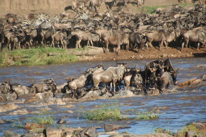 Serengeti N