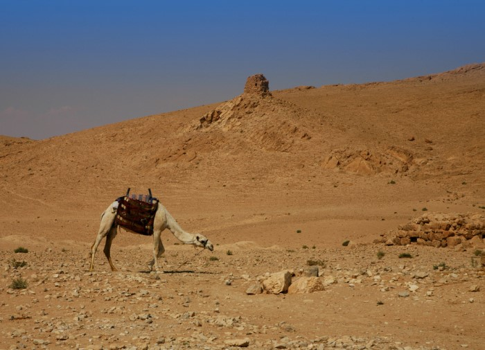 Syro-Arabische Woestijn