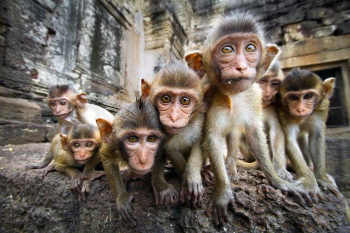 aapjes