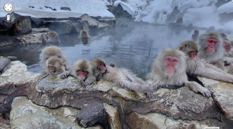 badende aapjes street view