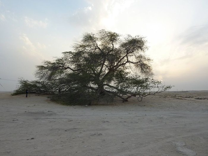 boom des levens