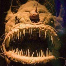 Top 10 Engste Dieren in de Zee