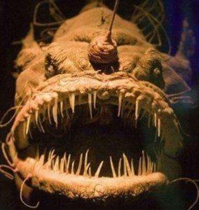 engste dieren in de zee